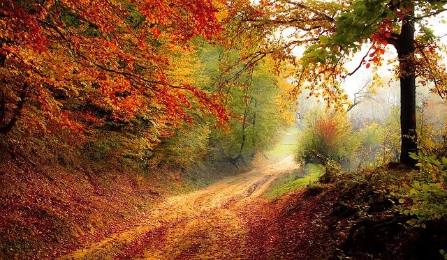 árvores em outono