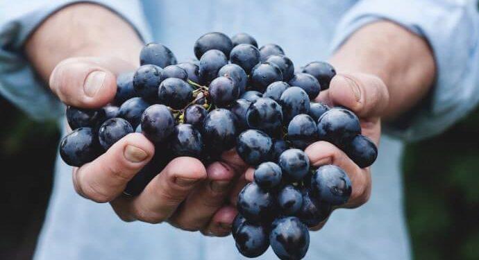 5 Princípios da Nutrição Funcional. Siga-os, Sua Saúde Agradece!